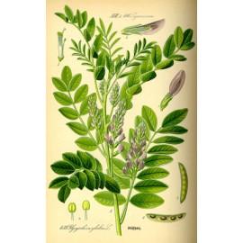Réglisse - Glycyrrhiza glabra L. - racine coupée (articulations, prostate, immunité, digestion, calme, poids)