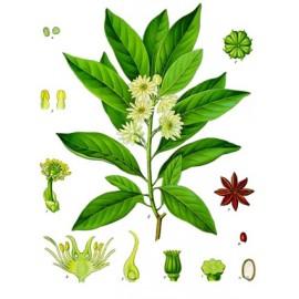 Badiane ou anis étoilé - Illicium verum - fruit (respiration, immunité, digestion)