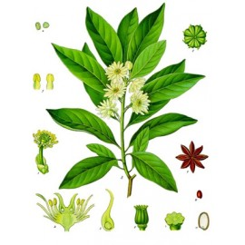 Badiane ou anis étoilé - Illicium verum - fruit (respiration, immunité, digestion)