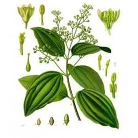 CannelleoucannelierdeCeylan- Cinnamomumverum - écorce (sucre, graisses, fatigue, digestion)