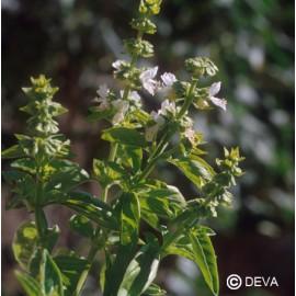 Basilic, élixir floral bio de Deva