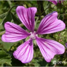 Mauve, élixir floral bio de Deva