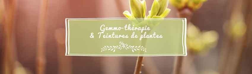 Gemmothérapie et teintures de plantes