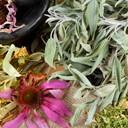Nos plantes médicinales classées par vertus