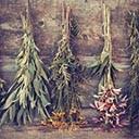 Plantes médicinales et infusions