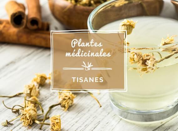 Des plantes médicinales pour votre santé